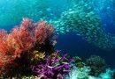 Hari Laut Dunia: Apa Kabar Ikan dan Karang di Laut?
